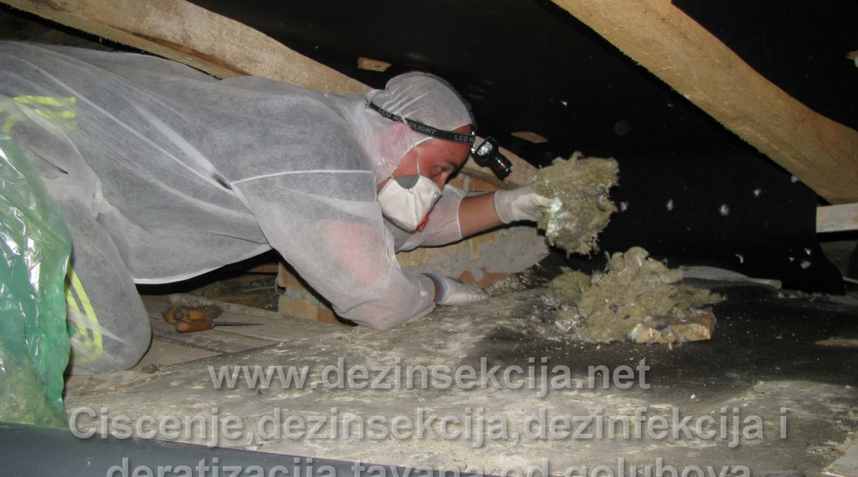 Postupak faze 2 čišćenja tavana od golubova.