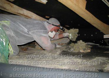 Čišćenje tavana i terasa od nastanjenih golubova i kompletno obezbeđivanje od daljih ulaska golubova