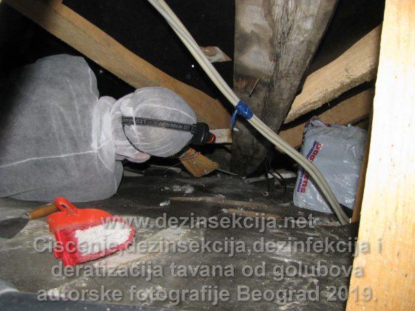 Čišćenje tavana se radi u ležećem i čučećem položaju.Temperature su preko 40 stepeni tokom leta a smrad neizdrživ čak i sa sertifikovanom maskom.Klijenti koji zovu za ovakvu vrstu usluga nemaju svest o tome šta znači u praksi profesionalno čišćenje tavana od golubova.Fotografije naših sanitarnih inženjera i daljih podizvođača dokumentuju sve rečeno.Radi se o vrlo nezahvalnoj vrsti posla gde i sa ponuđenih 100 eura dnevnice po radniku i izvršiocu niko ne želi da pristane da radi takvu vrstu poslova i za 100 eura po radnom danu.