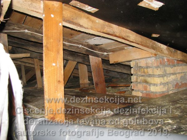 Inficirani tavani zgrada i terasa u Beogradu od golubova.Autorske fotografije.Klijent skupština stanara Svetogorska 25 na Vračaru 2017 e godine.