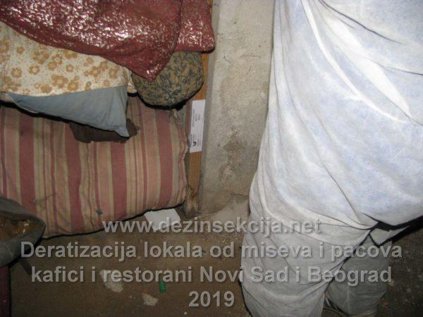 Služba za regulaciju,uništavanje i deratizaciju miševa radne fotografije Novi Sad 2019.