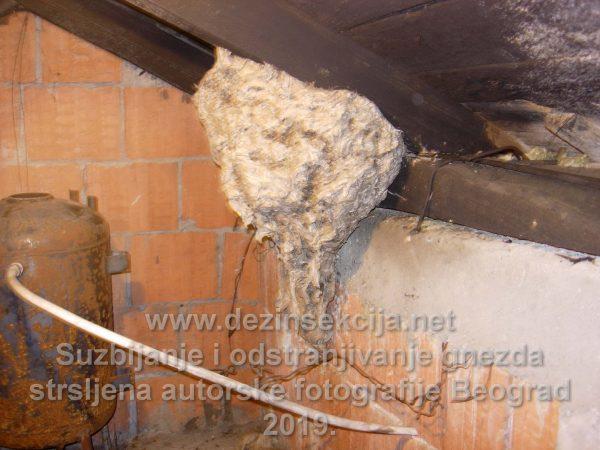 Gnezdo stršljena veličine 1 metra u prečniku Klijent Beogradsko naselje Kaluđerica.