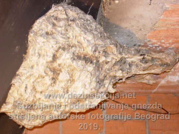 Napušteno gnezdo stršljena tokom zime.