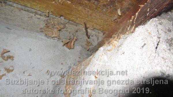 Odstranjeno gnezdo stršljena nakon angažovanja naših sanitarnih inženjera.Na gnezda koja su dostupna i vide se izdajemo bezuslovnu pismenu šestomesečnu garanciju.