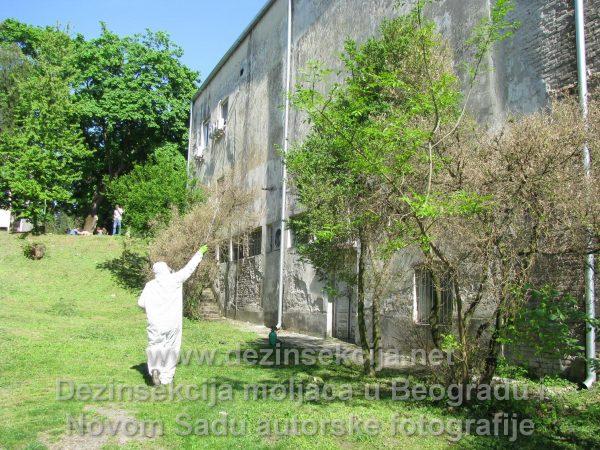 Analitička i sertifikovana dezinsekcija moljaca u Beogradu i Novom Sadu,Klijent Avala Film Beograd.Regulacija moljaca u okolnim drvećima i fasadi.Ujedno smo renovirali celokupne razbijene prozore gde su moljci ulazili tokom noći.