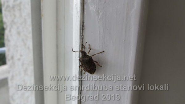 Smrdibuba prikaz namenskim fotoaparatom Klijent u Beogradu 2019 e godine.