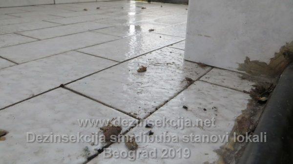 Dezinsekcija smrdibuba u Beogradskim i Novosadskim stanovima i lokalima.Postupak je takav da se pri izvršenju moraju birati i primenjivati brzodelujuća insekticiodna sredstva a sa druge strane se mora paziti o karenci i korišćenih preparata koji u praksi ne smeju se duže zadržati u vazduhu anaerobno duže od 30 do najviše 60 minuta po izvršenom tretmanu i moraju omogućiti nesmetani sigurni boravak ukućana nakon tretmana.