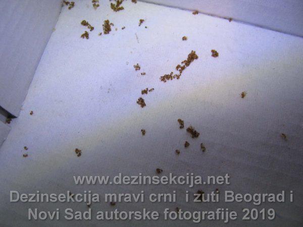 Dezinsekcija žutih mrava kuhinja i kupatilo.EFektivni učinak.Radna praksa Klijent Novi Beograd 2019 e godine.