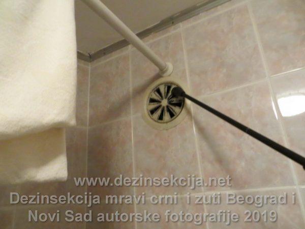 Regulacija žutih mrava u ventilacionim otvorima odakle ulaze iz komšijskih stanova.AUtorska fotografije Beograd 2019 e godine.
