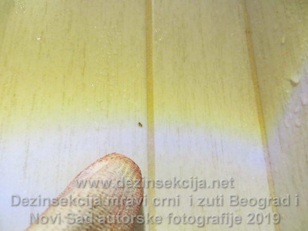Žuti mravi u kuhinji i celom stanu.Dezinsekcija 100% biorazgradivim preparatima neškodljivim po čoveka,kućne ljubimce i decu.
