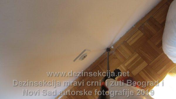 Dezinsekcija crnih i žutih mrava u Beogradu i Novom Sadu autorske fotografije 2019 e godine.