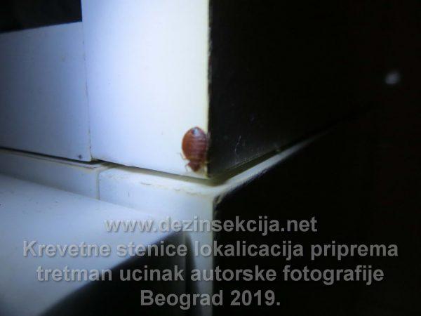 Po ulasku u objektu u ormariću u kupatilu uočena je stenica.Nakon svega par sekundi se vešto sakrila u procepima debljine manjim od 1mm unutar samog ormarića prikazano na prethodnoj fotografiji.