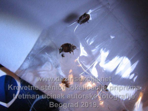 Uginute stenice nakon tretmana arhivski snimak naših biologa.Klijent Novi Beograd nakon povratka sa putovanja 2018 e godine.