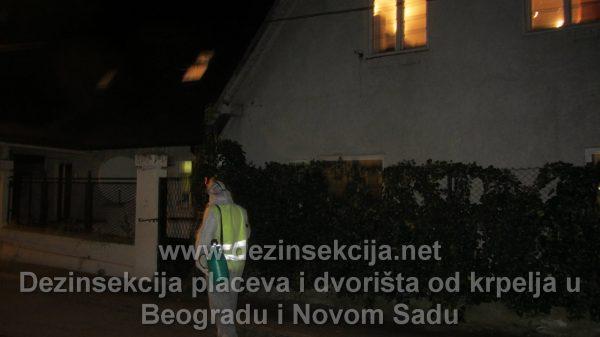 Uništavanje krpelja radne fotografije Beograd 2018.