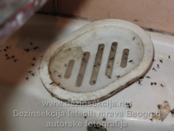 Leteći mravi tretman i pristup.