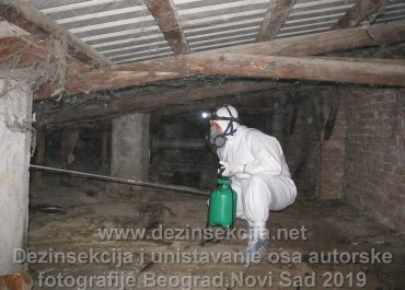 Ose osinjaci i gnezdo osa regulacija i dezinsekcija u Beogradu i Novom Sadu