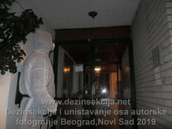 Regulacija i dezinsekcija osa u ulazima i fasadama zgrada.Klijent Skupština stanara zgrade u Beogradskomn naselju Banjica.
