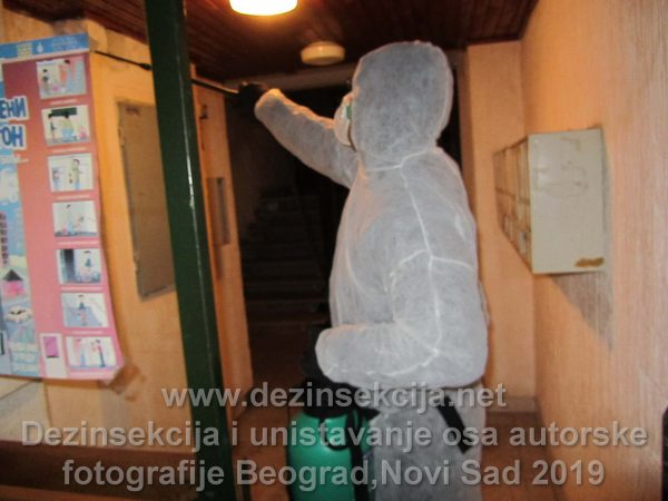 Slučaj iz radne prakse.Ose u lamperiji u ulazu u Beogradskom naselju Cerak opština Rakovica 2017 e godine.