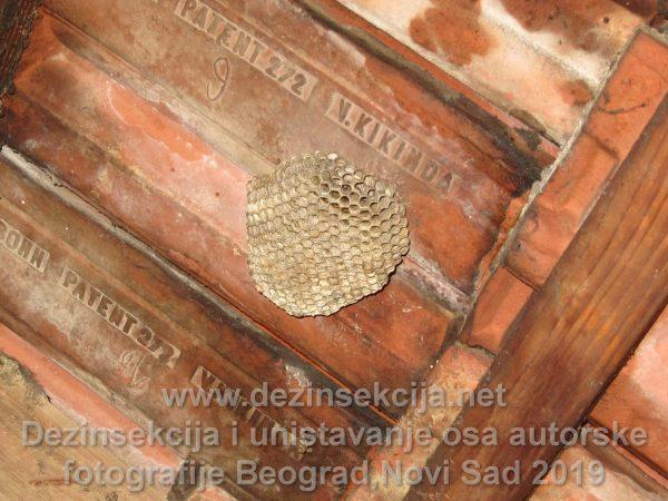 Fotografija gnezda osa napušteni tavan u okolini Beograda.