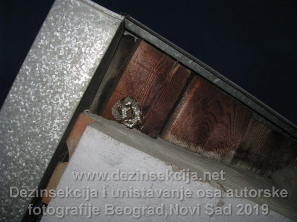Prikaz gnezda osa ispod strehe odosno dela zavućenog krova u Begradskom naselju Vračara 2015 e godine.