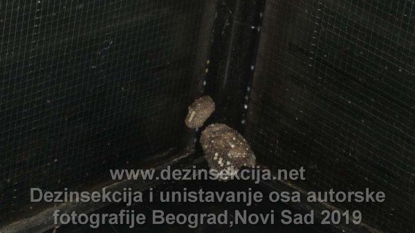 Gnezdo osa na terasama i balkonima u Beogradu i Novom Sadu.Autorska fotografija naših radnih timova.