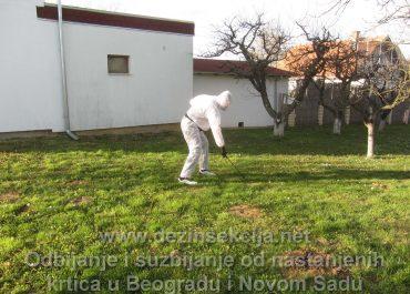 Krtice u dvorištima,placevima i zemlji radni učinak i opšte informacije
