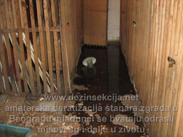 Podrumi u Beogradu i Srbiji se vrlo retko prskaju sa vrlo retkim postupcima deratizacije i dezinsekcije.Rezultat je nastanjivanje pacova,miševa i buva od mačaka koje tu žive u jesenjim i zimskim mesecima.