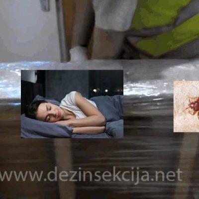 Dezinsekcija i unistavanje krevetnih stenica u Beogradu,Novom Sadu,Vojvodini,Srbiji,Evropi.Primena napredne kompleksne TRL metode u 100% regulaciji krevetnih stenica.