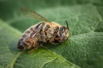 Novi pomor pčela zbog prskanja voća, najavljeno podnošenje krivičnih prijava
