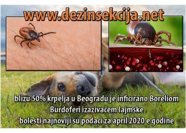 Najnovija vest-U Beogradu 50 odsto krpelja zaraženo bakterijom koja izaziva lajmsku bolest