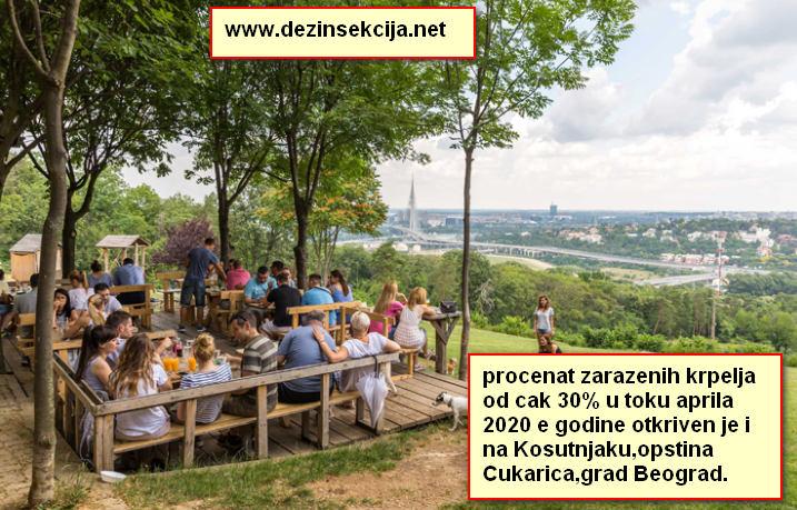 Kosutnjak popularno izletiste Beogradjana u opstini Cukarica je inficirano krpeljima od cega 30% ispitanih krpelja je pokazalo pozitivne testove na bakteriju boreliu burgdefari