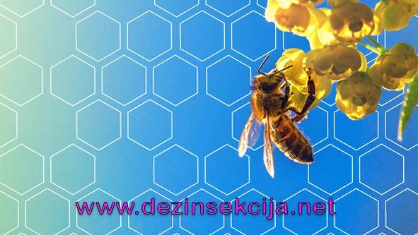 """Zeleznice Srbije zaprasivace putem """"hemijskih vozova """"pravcem svih pruga u Srbiji od 08 do 15 maja vegetaciju u okolinu usled smanjenja broja komaraca,muva i ambrozije.Pcelari i udruzenje pcelara se ovim putem obavestavaju da zbrinu svoje kolonije pcela u navedenom periodu.Saopstenje Zeleznice Srbije za 08 maja 2020 e godine."""