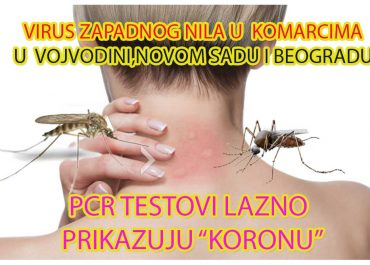 Smrtonosni Virus Zapadnog Nila otkriven u komarcima u Vojvodini i Beogradu