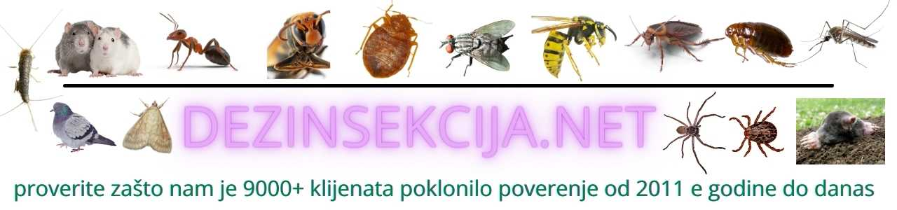 Dezinsekcija i deratizacija stanova,kuca,lokala u Beogradu,Novom Sadu,Vojvodini i Srbiji.